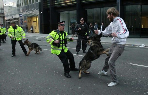 policedogs